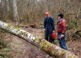 Ken and Carl Cut a Fallen Tree