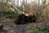 Uprooted!