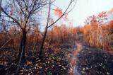 dry_season_in_brunei_2009