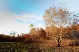 Drought Season_ 68.jpg