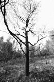 Drought Season_ 69.jpg