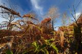 Drought Season_ 156.jpg