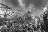 Drought Season_ 157.jpg