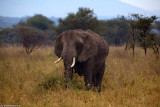 Serengeti Seronera