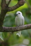 Other Bird & Wildlife Galleries