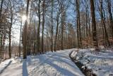 Taunus (Winter 2009)