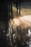 Mist in trees near dam