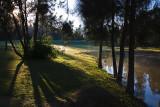 Trees and shadows at dam