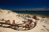 Branch on Botany Bay beach