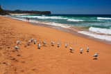 Warriewood Beach with gulls