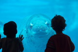 Leopard seal with two children silhouette