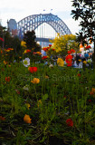 Sydney Harbour Bridge with poppies in foreground