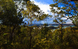Bush looking towards Hawkesbury  River