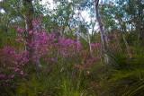 Bush wildflowers in Muogamarra Nature Reserve
