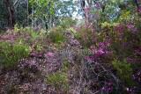 More wildflowers in Muogamarra Nature Reserve