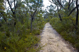 Pathway in Muogamarra Nature Reserve