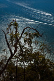 Gum tree with Hawkesbury River backdrop