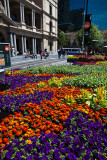 Flowers at Customs House Square, Sydney