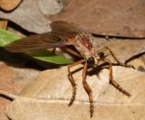 Dasypogoninae