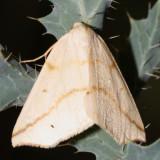 6859 - Neoterpes ephelidaria
