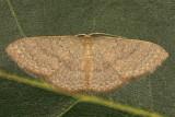 7132 - Common Tan Wave - Pleuroprucha insulsaria