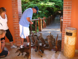 Frank feeding the White-nosed Coati's