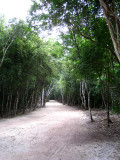 Coba jungle road
