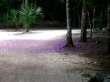Purple flower pedals on the road