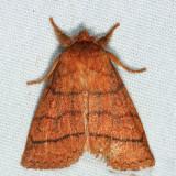 9929 - Mustard Sallow - Pyreferra hesperidago