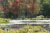 Scenic Beaverpond