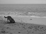 Old Sea Dog Discovers Treasure