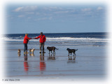His & Hers dogs (Jack Vettriano style?)