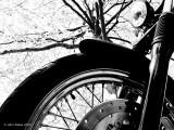 Harley - Worm's Eye View
