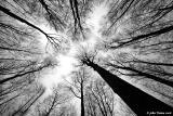 20060205 Treetops in Winter