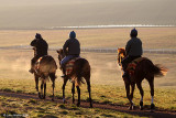 Early Morning on The Gallops 2