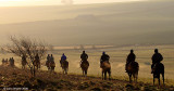 Early Morning on The Gallops 1