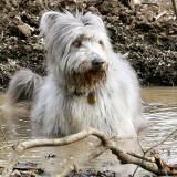 Mutt in Mud