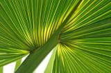 Palm 8630.jpg