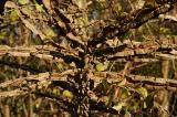wooden spider