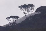 Peru, August-September 2009
