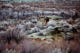 Log cabin, Arches NP, Utah, USA