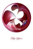 63 - Tulip Sphere Card