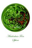 64 - Maidenhair Fern Sphere Card