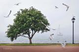 134 - Grand Marais Seagulls