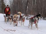 John Beargrease Sled Dog Marathon 2008