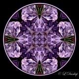 52 Hyacinth Kaleidoscope