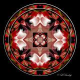 260.3 Fuchsia Kaleidoscope Complex
