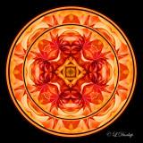 310 Dahlia Kaleidoscope Complex