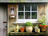 Photographer in the potting shed.