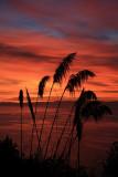 Dawns dawn this morning.